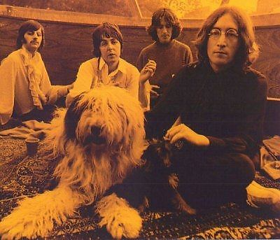 Photograph session at Paul's home with his Old English sheepdog